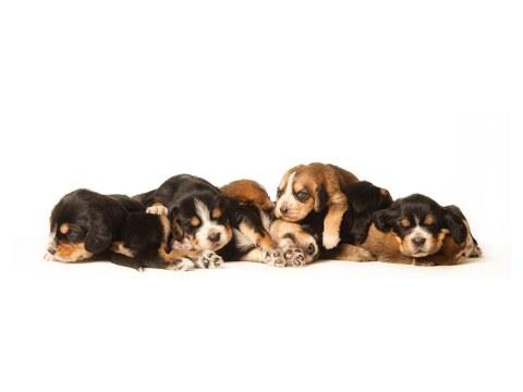 Fotos de perros para bebés