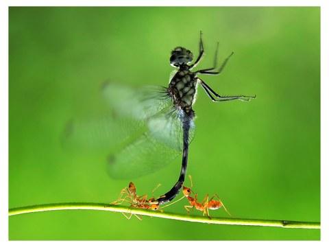 Photos d'insectes