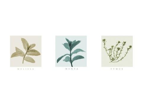 Photos d'herbes