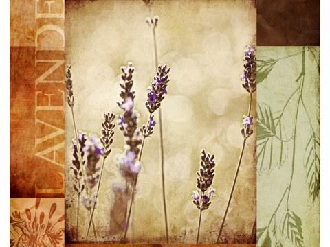 Lavendel Bilder