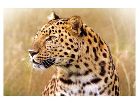 Leopard Bilder