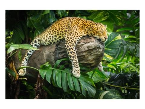 motivo de leopardo