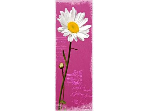 Photos de fleurs violettes