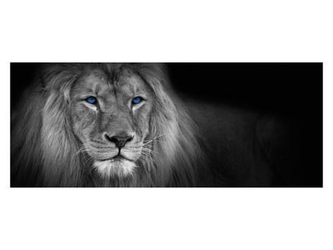 Panorama de lion