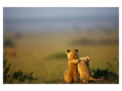 Löwenbaby Bilder