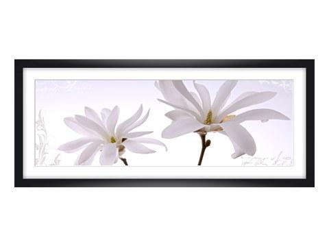 magnolie bilder in eleganter farbe f r stilvolle atmosph ren. Black Bedroom Furniture Sets. Home Design Ideas