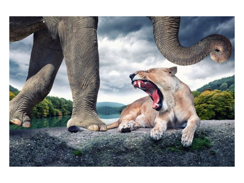 surreales Motiv Löwe und Elefant