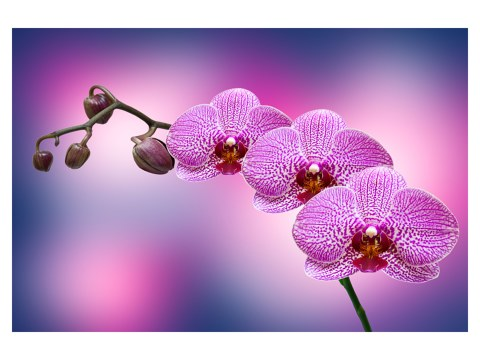 Orchidée sur toile