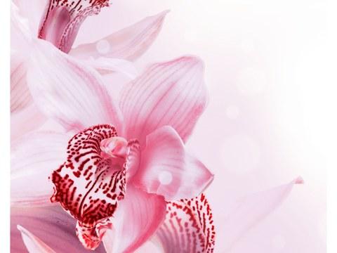 F r ihr zuhause individuelle orchidee bilder kaufen - Symbole de l orchidee ...