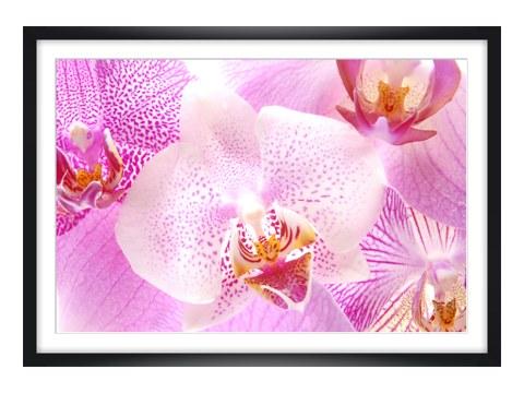 stilvolle orchidee als bilder f r ihren wohnraum. Black Bedroom Furniture Sets. Home Design Ideas
