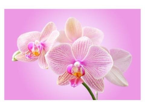 Motif d'orchidée