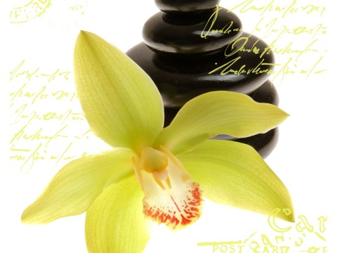 Orchideen Bilder