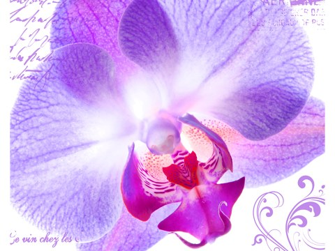 Orchideen Fotos