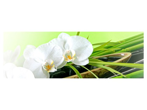 poster d'orchidées