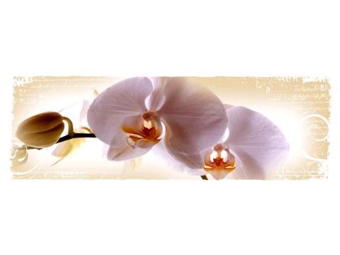 Orchideenbild