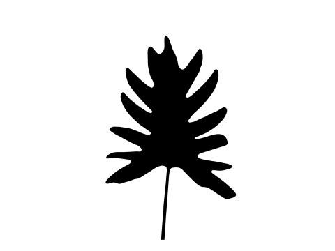Philodendron Blatt