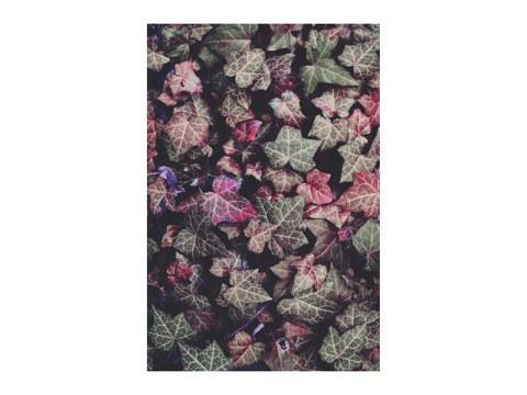 pink Efeu
