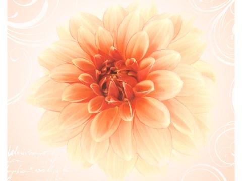 Poster Bloemen