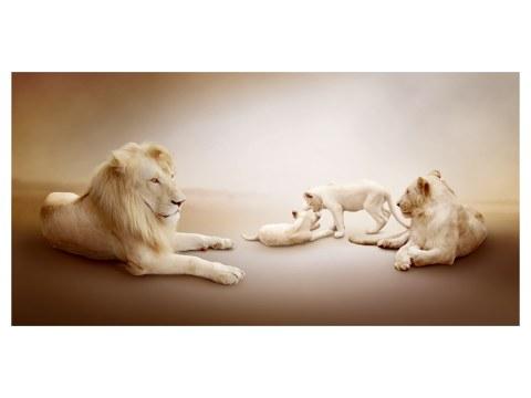 Safari Bilder