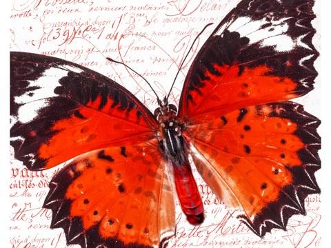 Schmetterlingsbilder