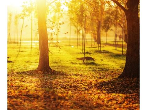 Photo de lever de soleil