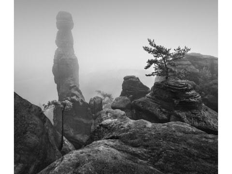 Barbarine im Nebel - S