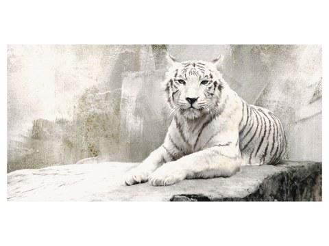 immagini Tiger