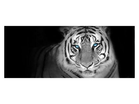 Tiger Panorama