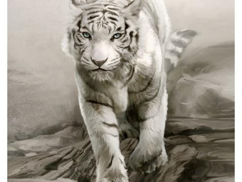 Tigerbilder