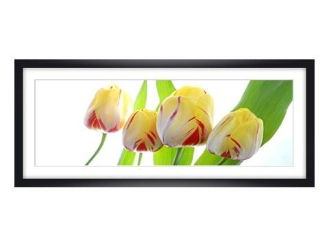 stilvolle tulpen bilder versch nern ihren wohnraum. Black Bedroom Furniture Sets. Home Design Ideas