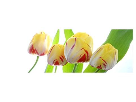 Tulpen Bilder