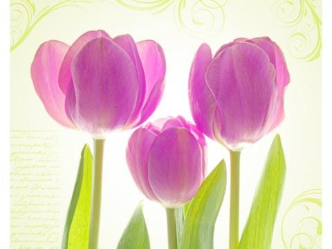 Poster de tulipes