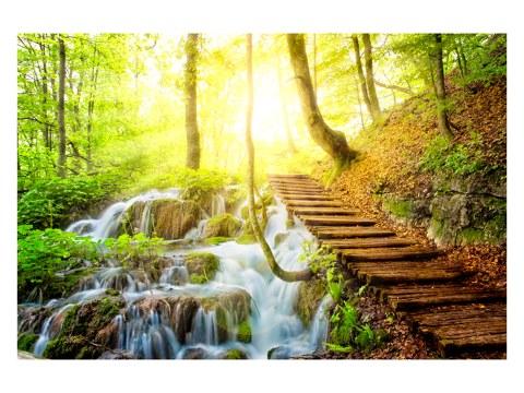 Waldweg Bild