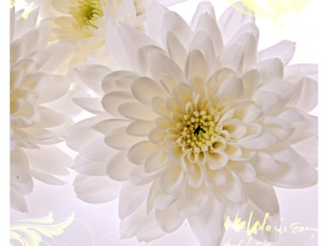 Photos de fleurs blanches