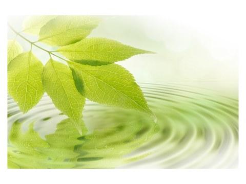 Zen Blatt Bild
